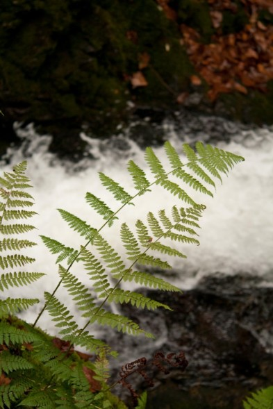 Dixon Falls, Fundy National Park
